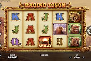 raging bison